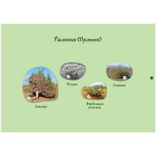 Наша страна - Россия: растения (магнитные карточки)