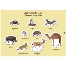 Наша страна - Россия: животные (магнитные карточки)