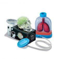 Юный врач. Анатомия человека (набор экспериментов от 4М)
